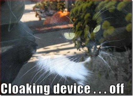 Pictures of Funny Animals (funny cat) - When A Cat Is Turning Off A Cloaking Device...
