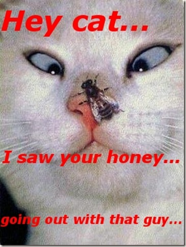 Funny Pictures: A reporting fly