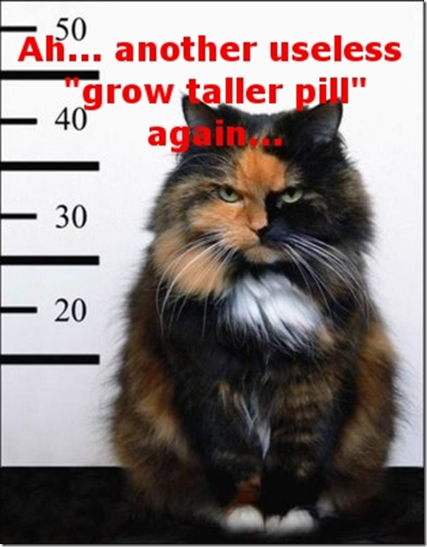 Funny Pictures: funny grow taller scam kitty