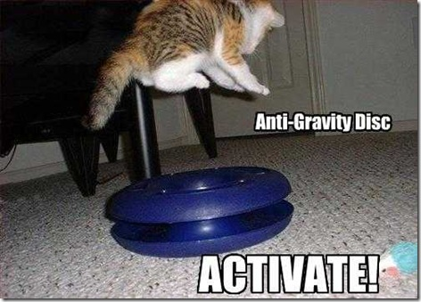 cats funny. cats funny pictures