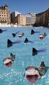 errebal tiburones
