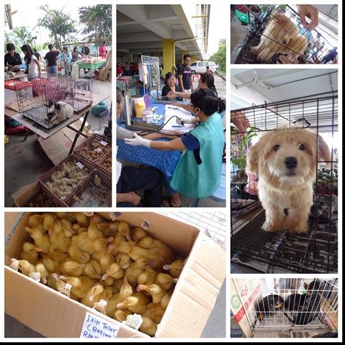 Sat Market @ Kolombong