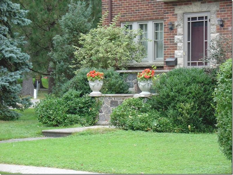 Begonias in Pots