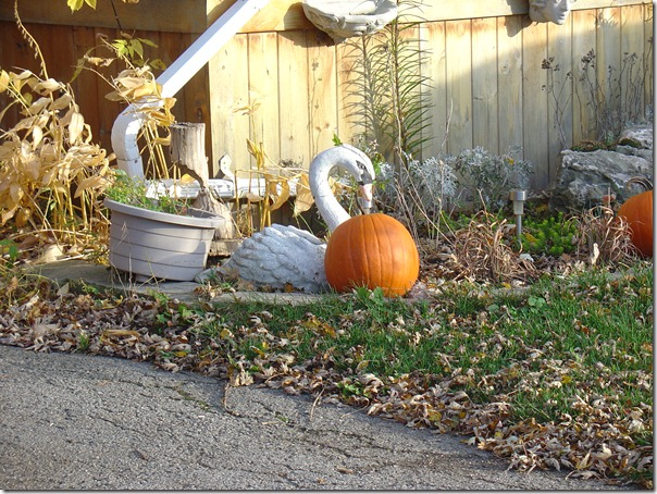 Swan and pumpkins