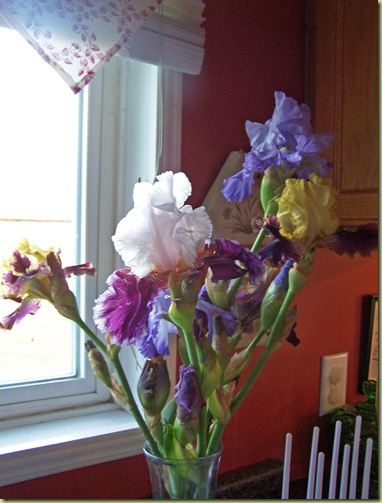 kitchen iris