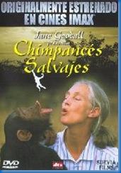 chimpancés salvajes
