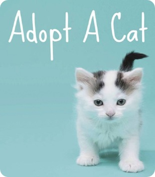 adopt a cat small
