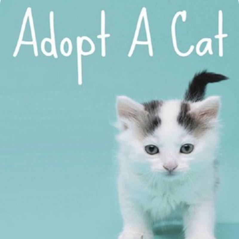 Día Mundial del Gato Callejero