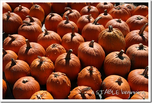 hunt club farm pumpkins 106