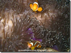 Dive Site 2_30 - Edit Clown Fish [1280x768]