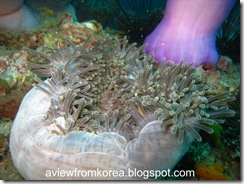 Dive Site 5_20 [1280x768]
