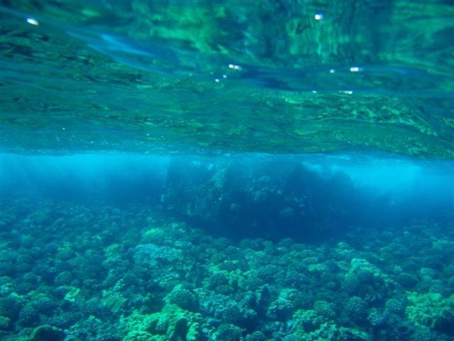 [Maui Snorkeling_11 (1) (Medium)[2].jpg]