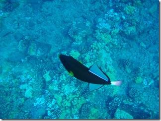 Maui Snorkeling_13 (1) (Medium)