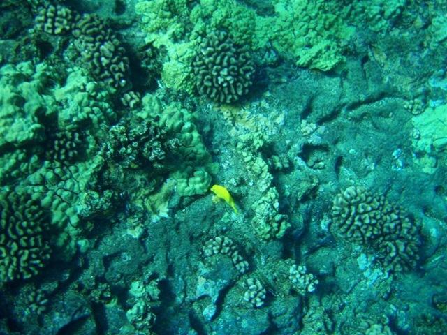 [Maui Snorkeling_15 (1) (Medium)[2].jpg]