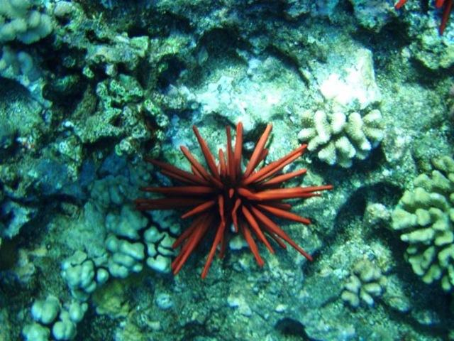[Maui Snorkeling_17 (1) (Medium)[2].jpg]