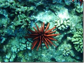 Maui Snorkeling_17 (1) (Medium)