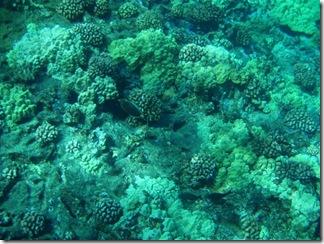 Maui Snorkeling_18 (1) (Medium)