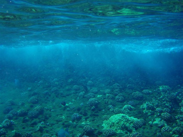 [Maui Snorkeling_20 (1) (Medium)[2].jpg]