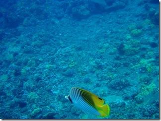 Maui Snorkeling_24 (1) (Medium)