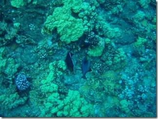 Maui Snorkeling_26 (1) (Medium)