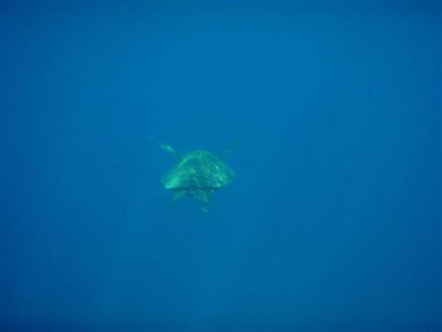 [Maui Snorkeling_28 (Medium)[5].jpg]