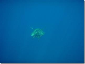 Maui Snorkeling_28 (Medium)