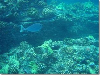 Maui Snorkeling_30 (Medium)