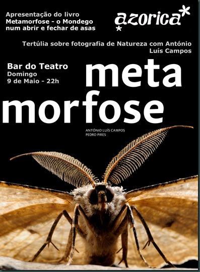 Azorica_metamorfose