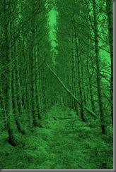 woods 014
