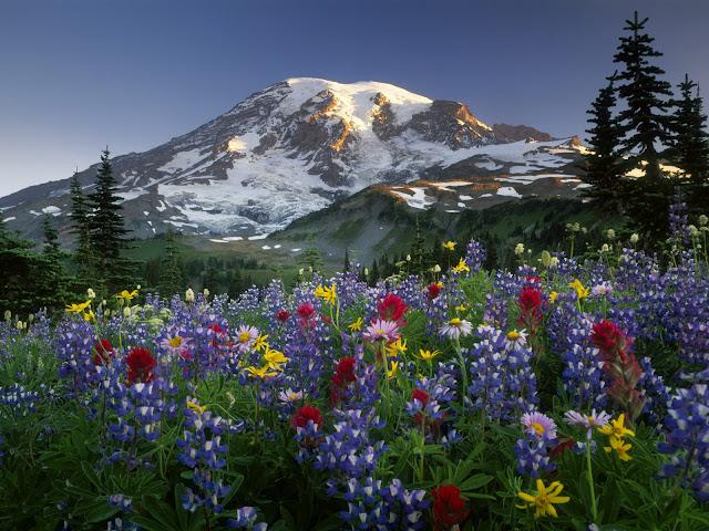 Mazama%20Ridge%20Wildflowers%2C%20Mount%20Rainier%20National%20Park%2C%20Washington