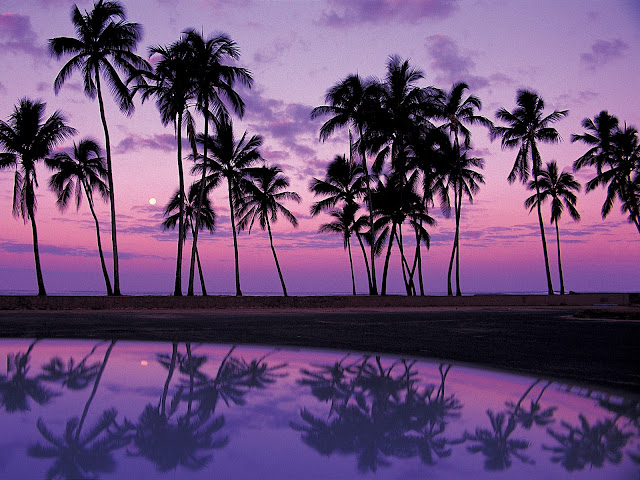 Palms%20at%20Sunset%2C%20Oahu