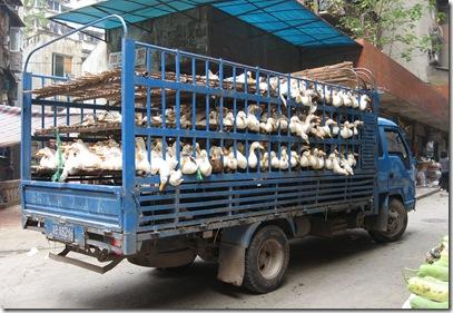 duck truck2
