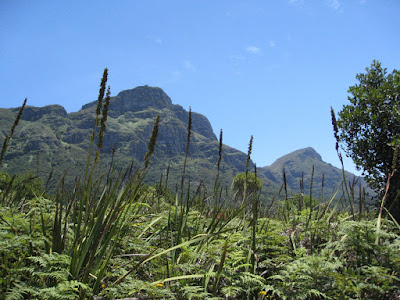 Table Mountain behind KirstenboschNational Botanical Garden in Cape Town