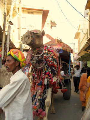 Man with camel in Rajasthan