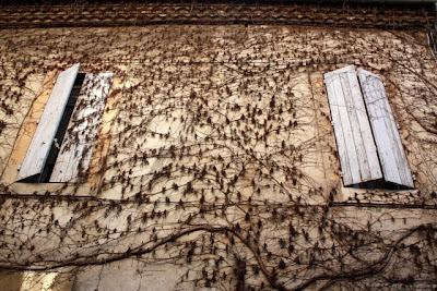 Avignon Vineyard