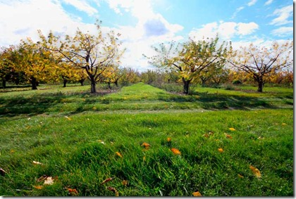 New-York-orchard