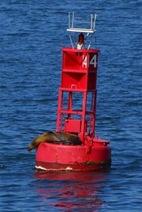 250px-Buoy_seal
