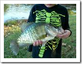 Southern Crappie, Midwest Crappie. Crappie fish The Crapie Fishing photos/fotos/images/pictures/clip arts/line drawings for Wallpaper. Download for free