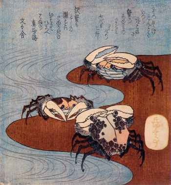 Cangrejos cerca de la marea