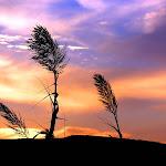Beautyful Landscape (1).jpg