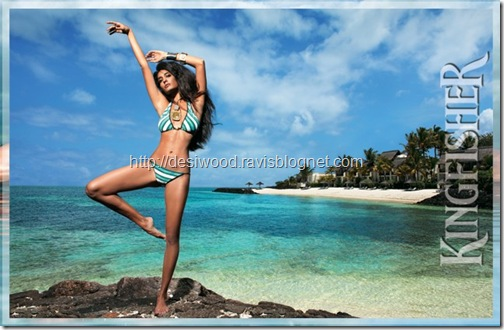 kingfisher_calendar_2011-b
