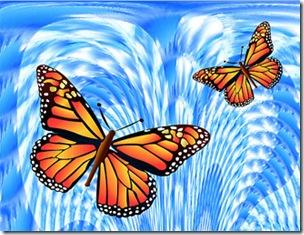 butterfly_x_2