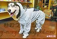 funny-everyday.blogspot.com00003