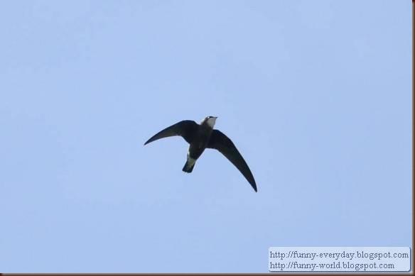 fastest-bird-580x385