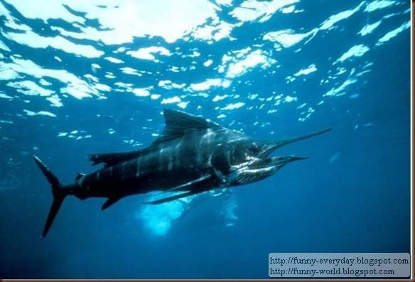fastest-fish-580x393