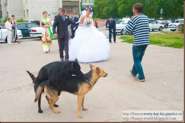 weddings (4)