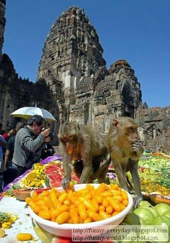 Monkey Festival (2)