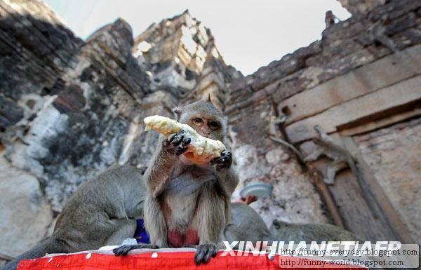 Monkey Festival (3)