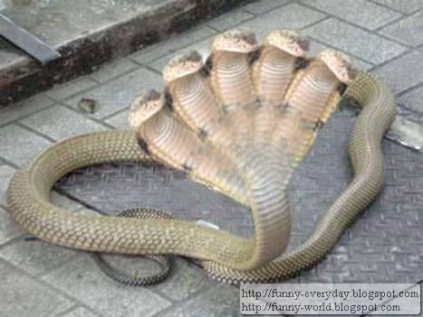五頭蛇照片 (1)