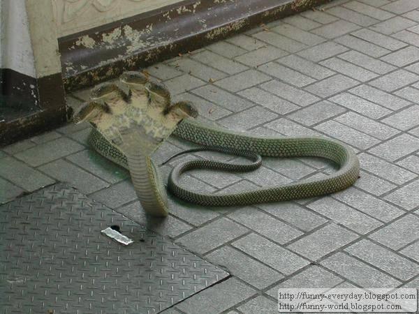 五頭蛇照片 (2)